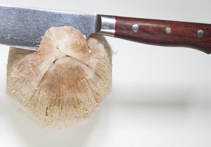 aapne en kokosnott