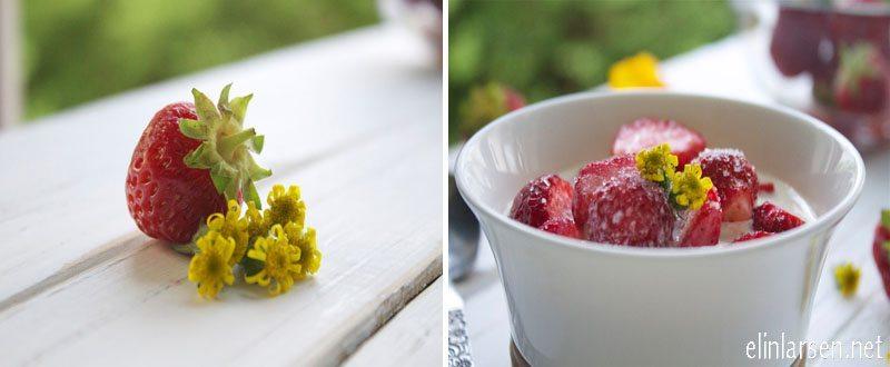 Beste jordbæroppskrift- jordbær og fløte